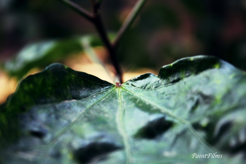 IMG_9393_Fotor