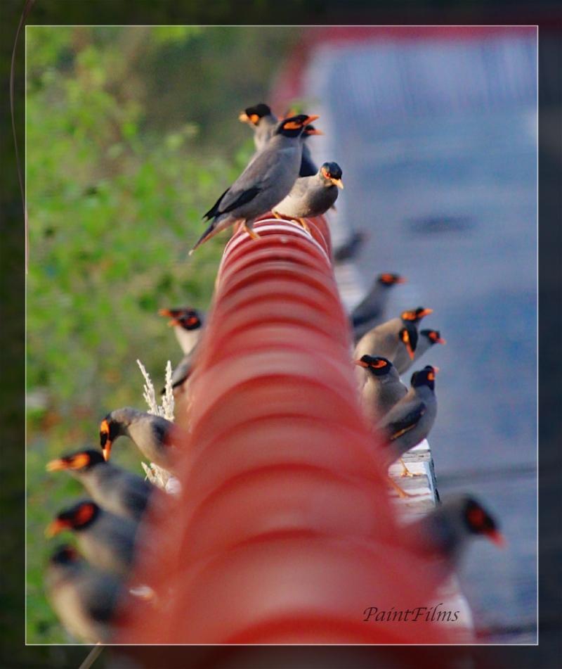Canon EOS 1200D52389_Fotor