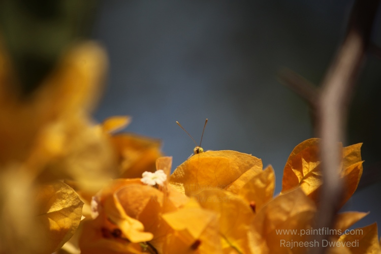 IMG_3586_Fotor